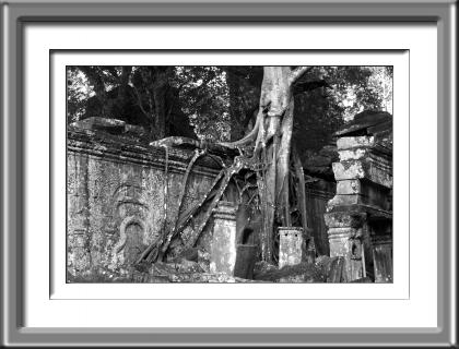 temple, Cambodia, ruins, jungle