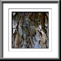 bark, brown, grey