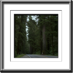 Redwood Highway  #4