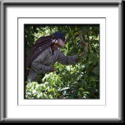 woman,farm worker